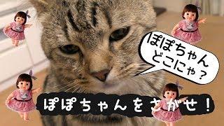 ぽぽちゃんがいなくなった?? ぽぽちゃーん!!