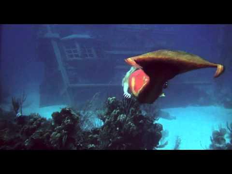 Splash1984720p under water scene