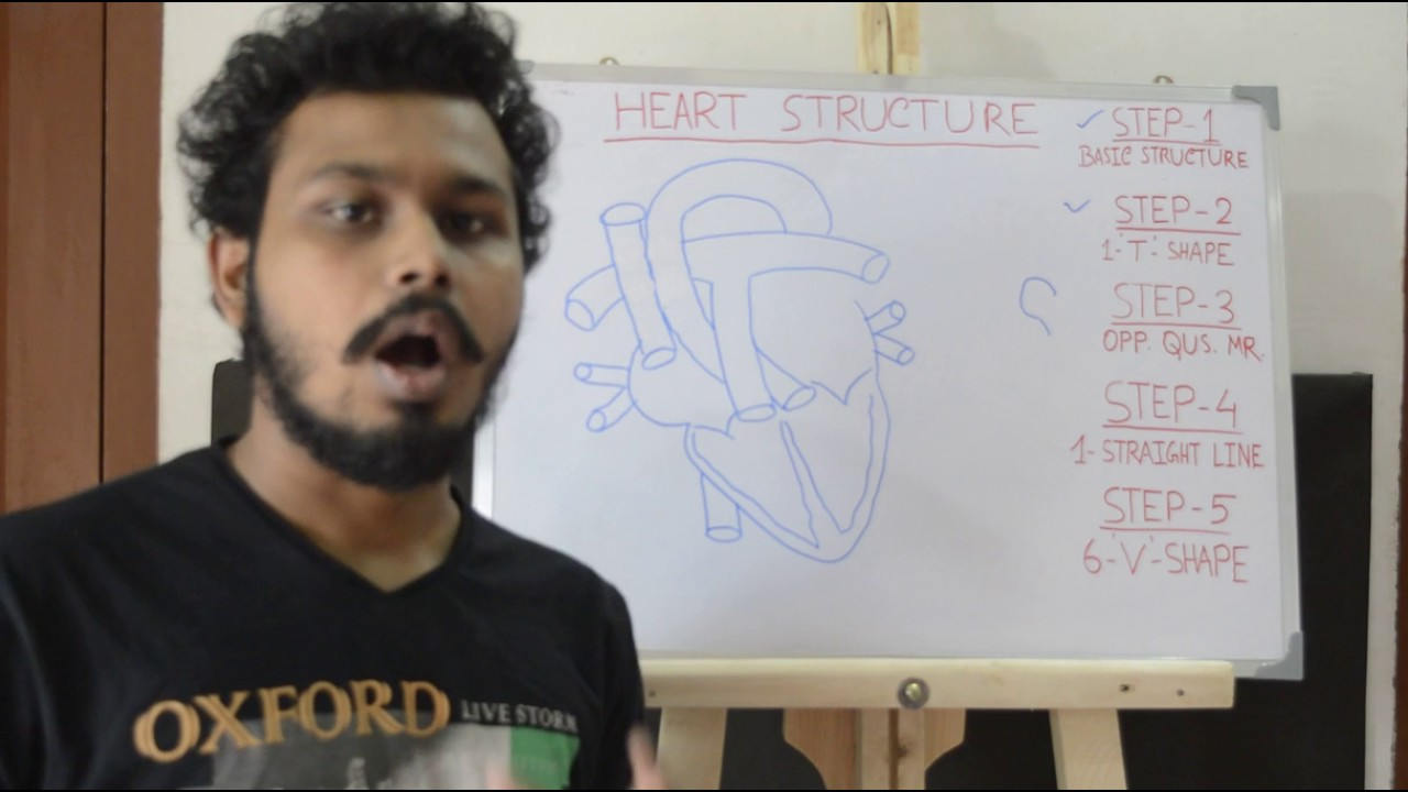 Easy way to draw heart structure by 5 steps | labeling of heart structure