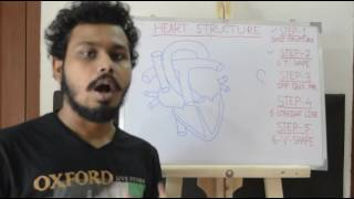Easy way to draw heart structure by 5 steps   labeling of heart structure