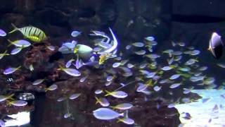 Aquascaping - Aquarium Ideas From The Art Of The Planted Aquarium [aquascaping - Aquarium Ideas]