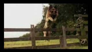 Snuf de Hond in Oorlogstijd vanaf 26 juni in de bioscoop!