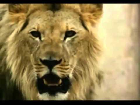 Les vrais chrétiens - l'arène de lions (Film