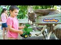 Toy Trucks and Cute Animals: John Deere Backhoe Tractors Feeding Goats, Deer at Park
