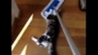 кошки-полотеры