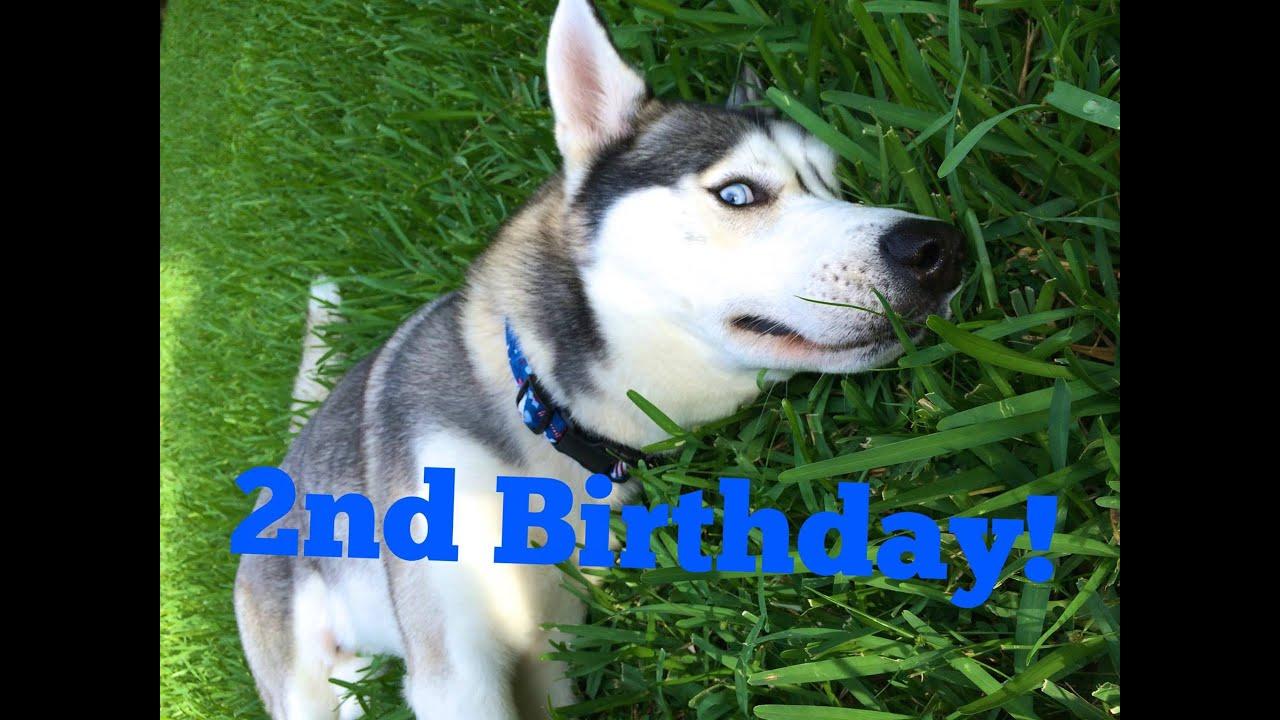 Gohan's 2nd Birthday! So Much Fun!