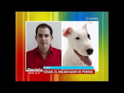 Humor: Hoy es San Roque y conocemos a las mascotas de nuestros presentadores
