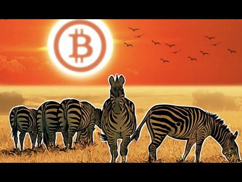 Bitcoin BTC to Save Africa | Bitcoin BTC Ripple XRP Ethereum ETH Cardano ADA Outlet404