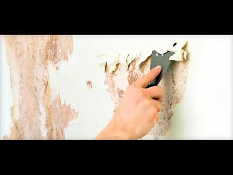 Как убрать плесень и грибок со стен: устраняем причины