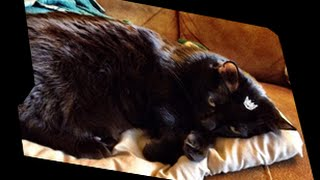 Transformers Reprolabels Volume 3 Thumbnail