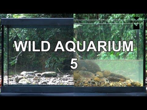 Wild Aquarium 5