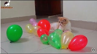 Cat Playing With Balloons | Cat Vs Balloons | Meo Cover Home