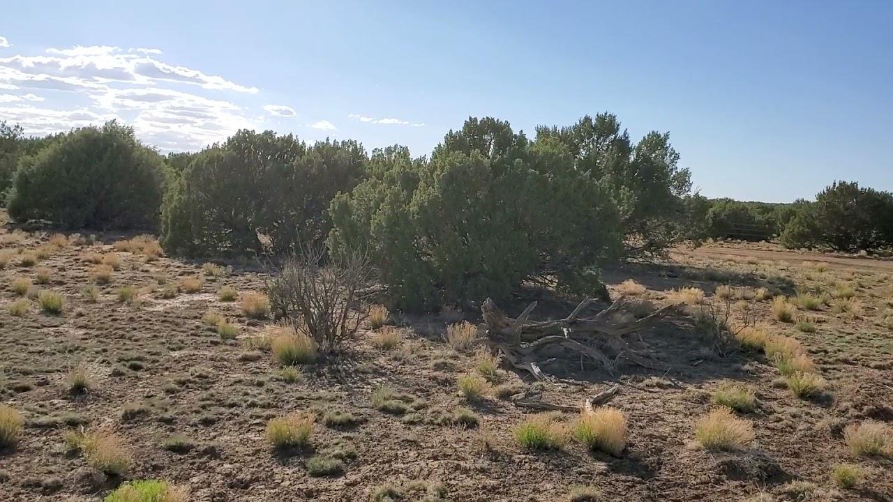 9.9 Acres – RV Ok! In Concho, Apache County AZ