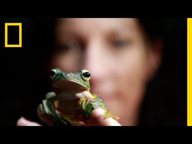 National Geographic Live! - Lucy Cooke: Saving the Creeps Travel Video
