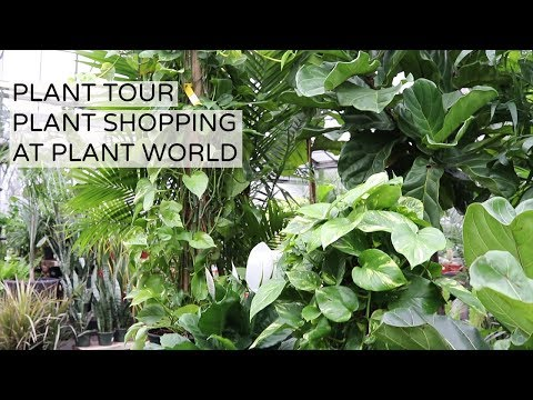 Houseplant Shopping And Tour At Plant World