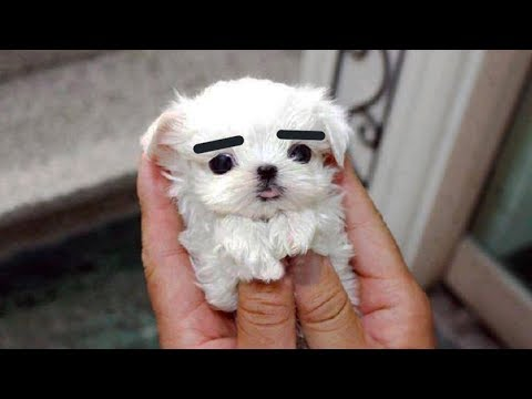 Cute is Not Enough - Funny Cats and Dogs Compilation #231