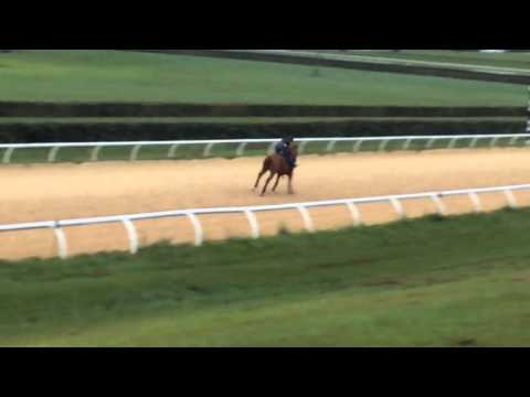 City Zip out of A P Indy mare