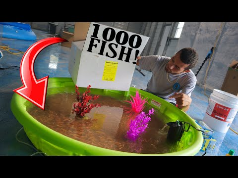 HOMEMADE BackYard Mini Pool Pond Feeder FISH Set Up!!