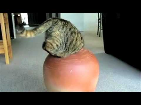 Supercats: Episode 2 — Moar Hilarious Cat Videos!