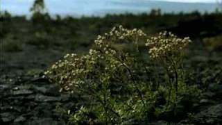 Апокалипсис Земли 5/5 (документальный фильм)