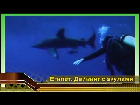 видео с акулами