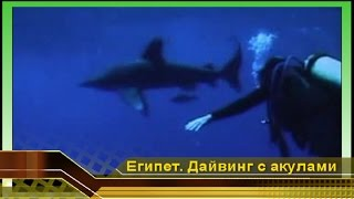 Акулы атакуют! Мир акул. Проверка нервов. Дайвинг с акулами в Красном море, отдых в Египте
