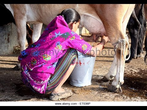 Village How To Get Desi Girl Milking Milk From Cow latest live thumbnail