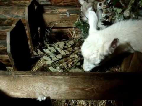 Кормушка для коз, наш вариант