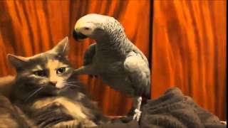 Funny Animal Videos  funny fail video 2014 Part9