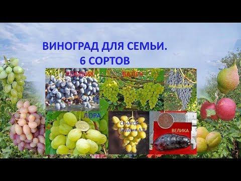 Виноград для семьи. 6 сортов. Ответ на вопрос
