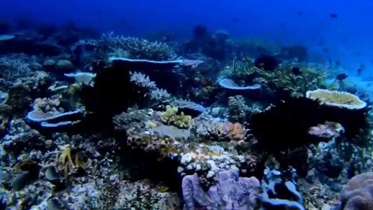 Diving In Tawali(Alotau) Papua New Guinea Dec 2014