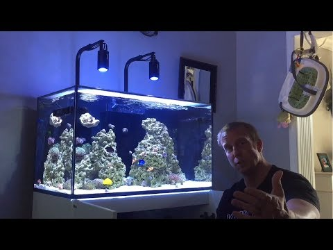 Red Sea Reefer 250 | 7 Months | DIY Screen Top | Manifold DONE | Flat Worms GONE | Bubble Scrubbing?