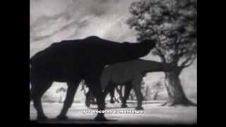 JOURNEY INTO TIME.  1960 Animated Classroom Film on Dinosaurs & Evolution.