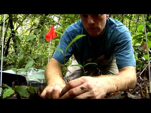 Barro Colorado Island: BCI - Official Video - Smithsonian Tropical Research Institute in Panama