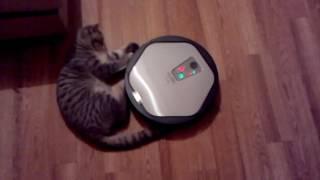 Funny cat vs iRobot         Кот vs робот-пылесос