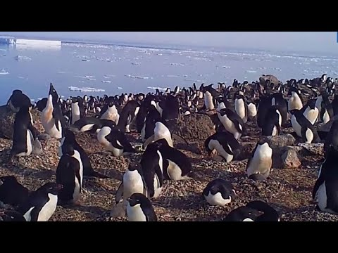 Huge penguin colony discovered on remote Antarctic islands