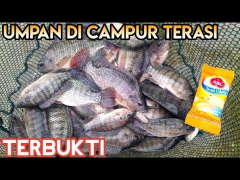 Umpan Mancing Ikan Nila Mujaer Tawes Ikan Sungai Youtube