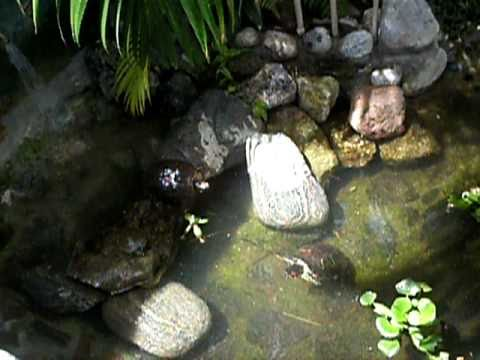 Tortugas de orejas rojas reacci n youtube for Estanques de plastico para tortugas