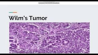 Macroscopic protocol of the Wilms Tumor.