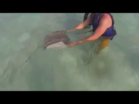Sharks & Rays in San Andres & Providencia, Colombia