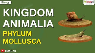 Kingdom Animalia: Phylum Mollusca