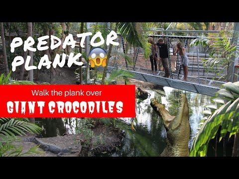 Predator Plank- Walk Over Giant Crocs!! | Wildlife Habitat Port Douglas, Tropical North Queensland