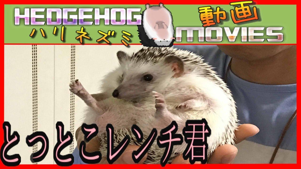 またまたレンチ君登場!^^Hedgehog