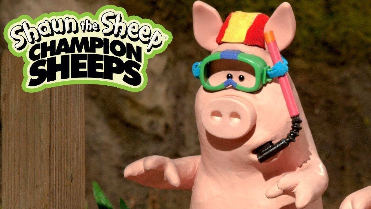 Bơi | Championsheeps | Những Chú Cừu Thông Minh [Shaun the Sheep]