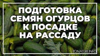 Подготовка семян огурцов к посадке на рассаду | toNature.Info