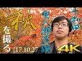 【秋田/青森】十和田湖・奥入瀬渓流の自然に癒された秋【4K】