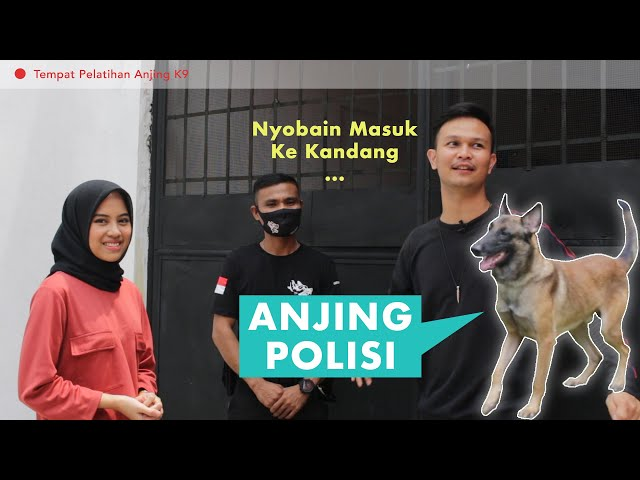 Digigit Anjing Herder | Narashima DTC Depok [URBAN EXPLORE]