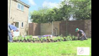 Planting A Perennial Flower Bed With Llewellyn Landscape & Garden Design