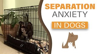 Dog Training In London: Consultation On Separation Anxiety