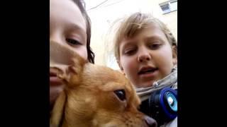 Девочка с собакой страшное видео страшилка